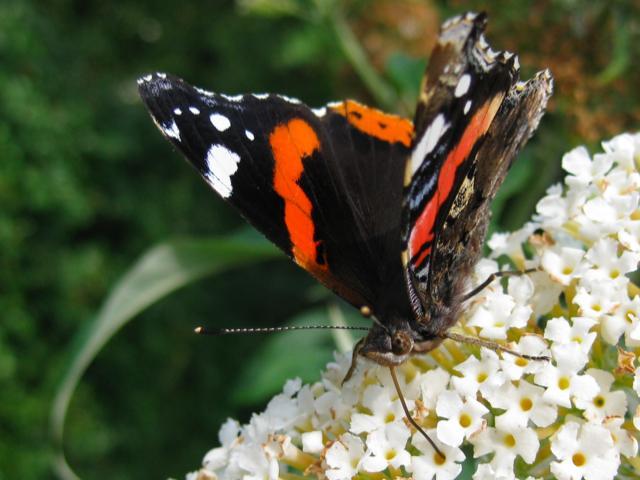 afbeelding verjaardag vriendin vlinder