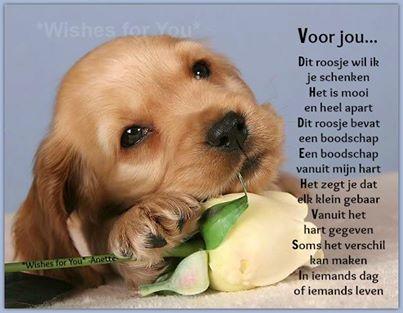 Gedichten Allerlei Van De Hak Op De Tak Hondjes Pagina 75