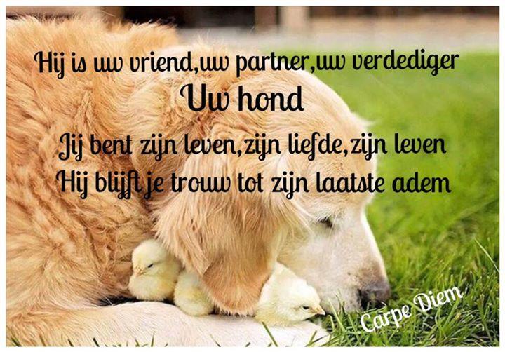 mooie honden spreuken Leuke Spreuken Over Honden   ARCHIDEV mooie honden spreuken